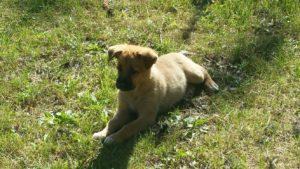 turismo rural con perros en huesca